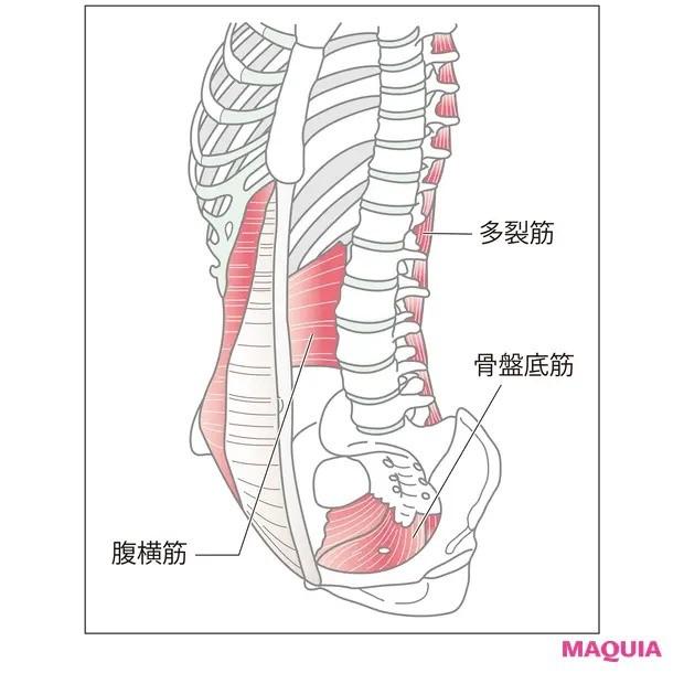 【ウエストのくびれの作り方】膣を締めるだけでトレーニングに「骨盤底筋トレーニング」