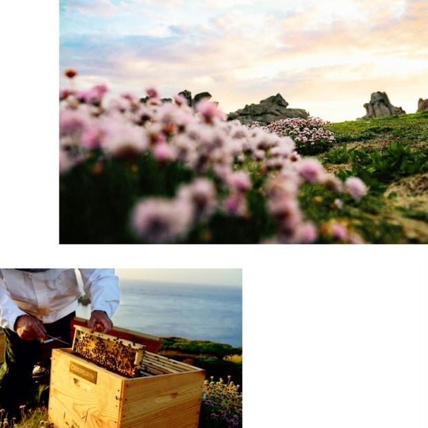 ゲランは2011年ウエッサン島のブルターニュ・ブラックビー保護協会と長期の研究パートナーシップを締結。サステナブルな取り組みを続けている。