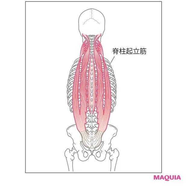 【ウエストのくびれの作り方】背中全体を覆う脊柱起立筋をゆるめる「背骨ほぐし」_1