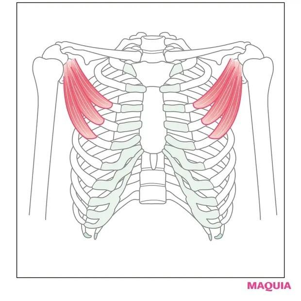【ウエストのくびれの作り方】巻き肩を改善して猫背もすっきり「小胸筋ほぐし」_1