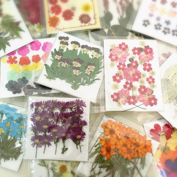 気分が上がる!色鮮やかな、たくさんの押し花たち♡