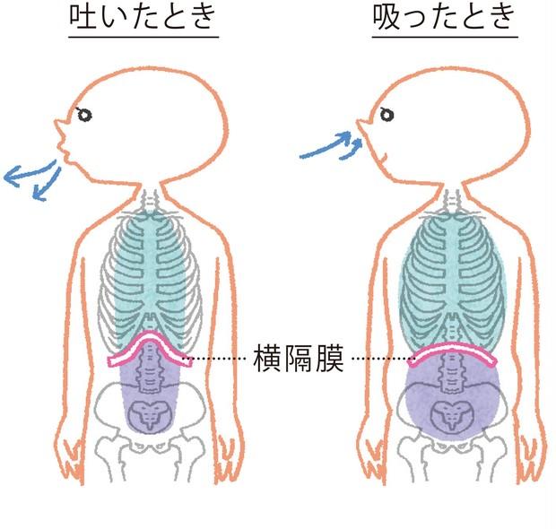 腹式呼吸で、免疫の要、「横隔膜」をコントロール