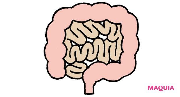 """消化、吸収、排泄を行う""""第二の脳"""":腸"""
