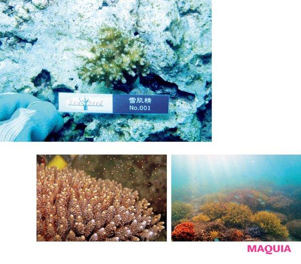 NPO法人への寄付だけでなく、サンゴ留学として沖縄のサンゴ畑で株分けを行うツアーも