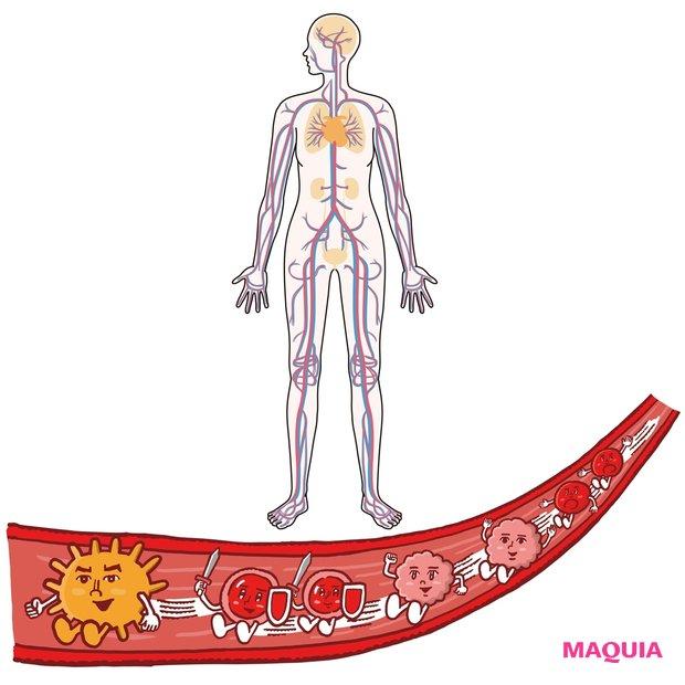 """今、意識すべきは""""血管力""""! プロが教える血管美容の基礎知識"""