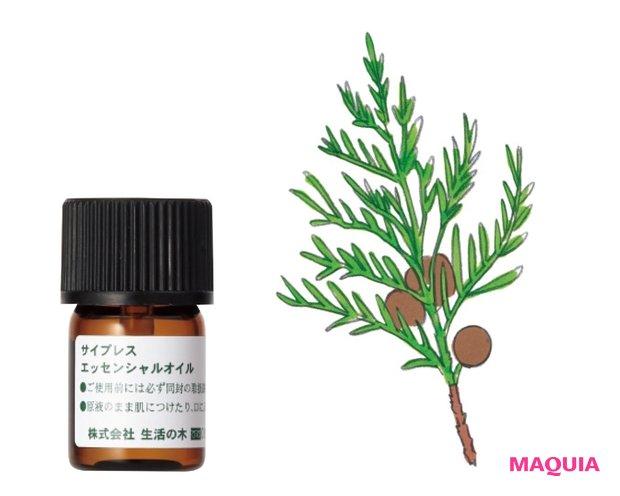 サイプレス精油 3mL ¥660/生活の木