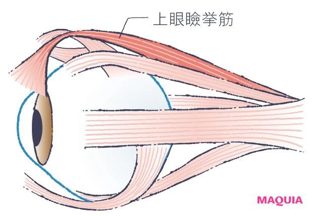 目を開くとき使うべきは おでこの筋肉でなく上眼瞼挙筋
