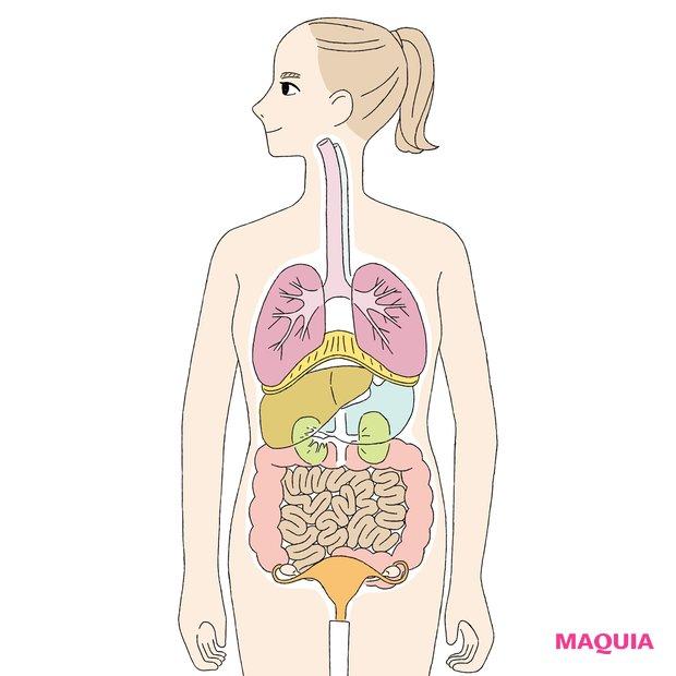 内臓美容で健やか美をGET! 美容に関係のある臓器をピックアップ_1