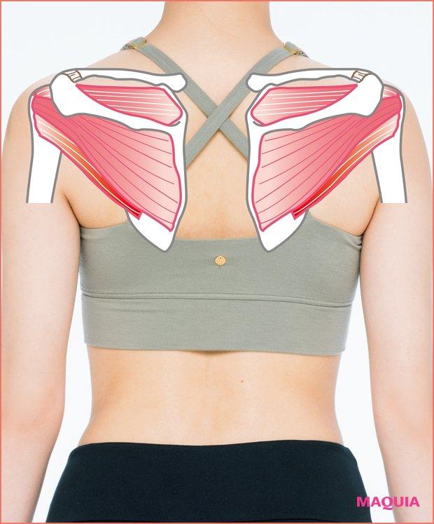 バストアップの秘訣は肩の筋肉