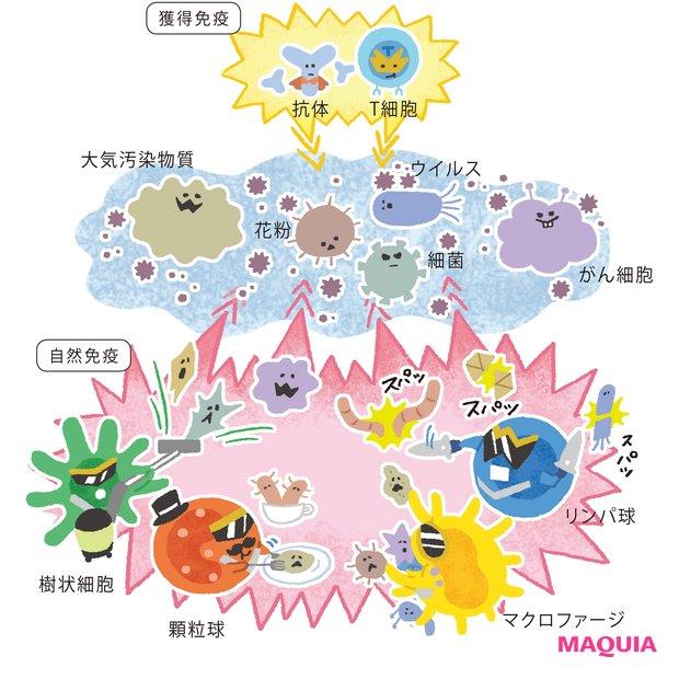 免疫とは、体、肌、心を 守る「警備システム」