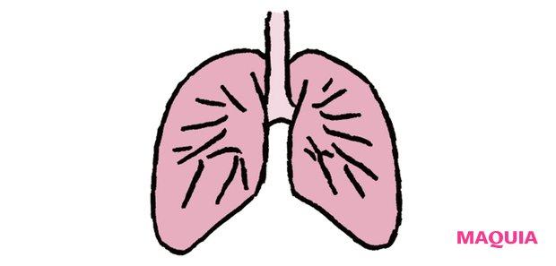 【呼吸の要 】 肺