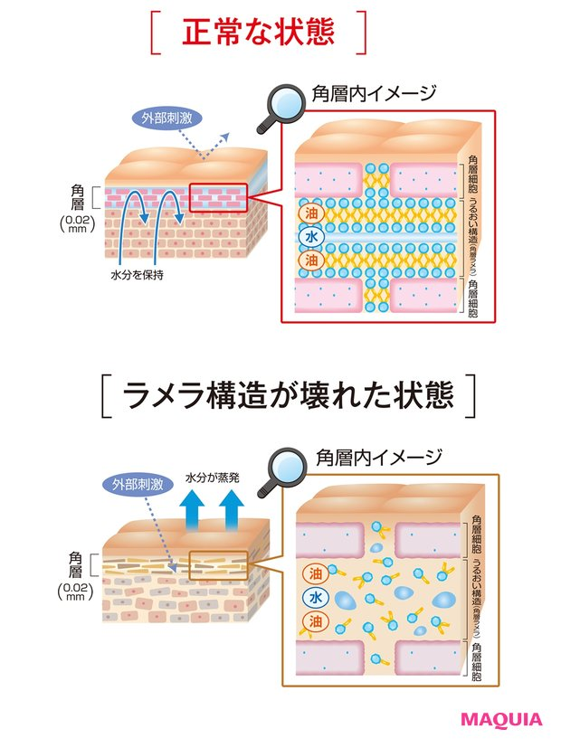 潤いの源となる細胞間脂質のラメラ構造の回復を促進