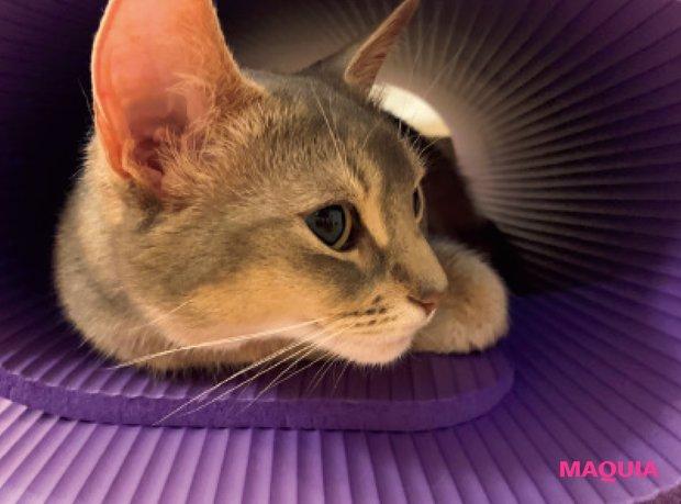 愛猫のるっちゃんに見守られながら、家の中で全身を鍛えてます