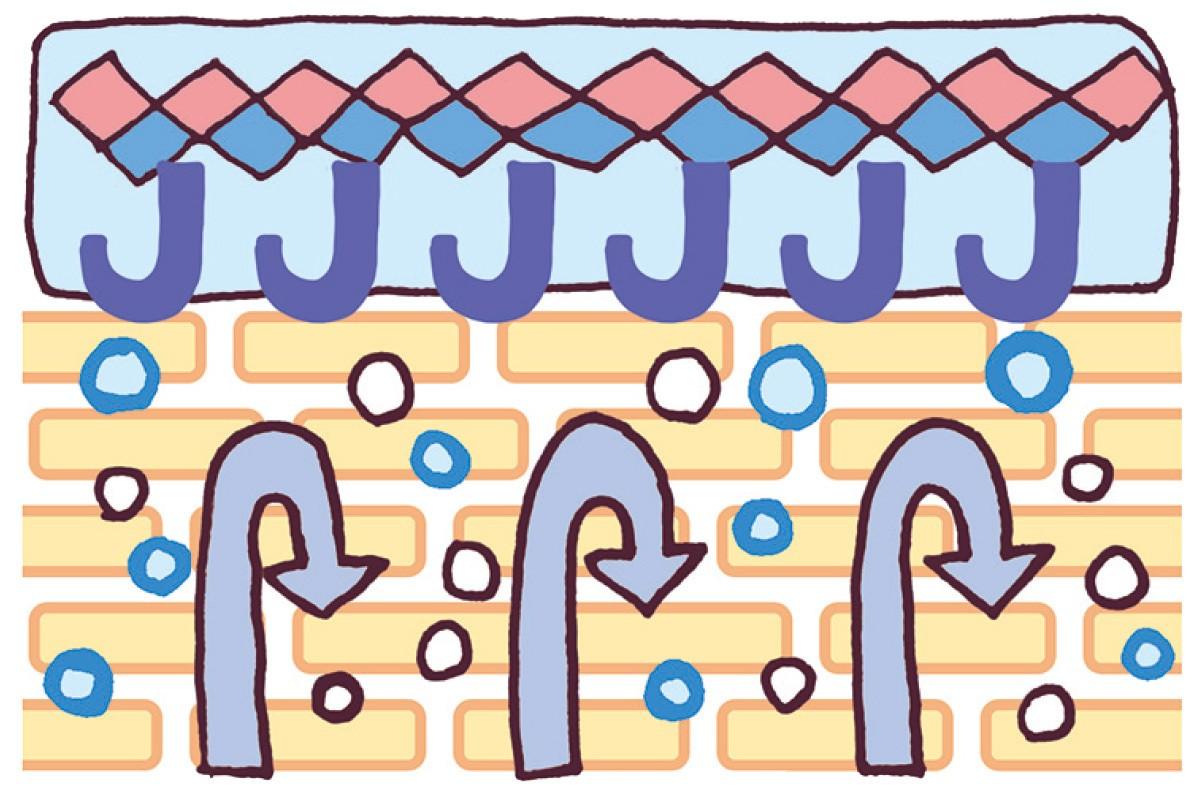 """その""""水""""は、みずみずしさを引き寄せる イプサの名品化粧水で満たされた美しさへ_5"""