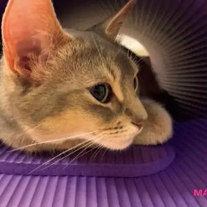 【美弥るりかさん】「ダンスはもちろん、歌や発声にも筋肉はマスト。愛猫のるっちゃんに見守られながら、家の中で全身を鍛えてます」
