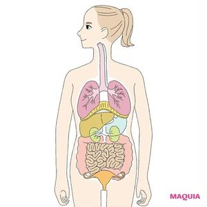 内臓美容で健やか美をGET! 美容に関係のある臓器をピックアップ